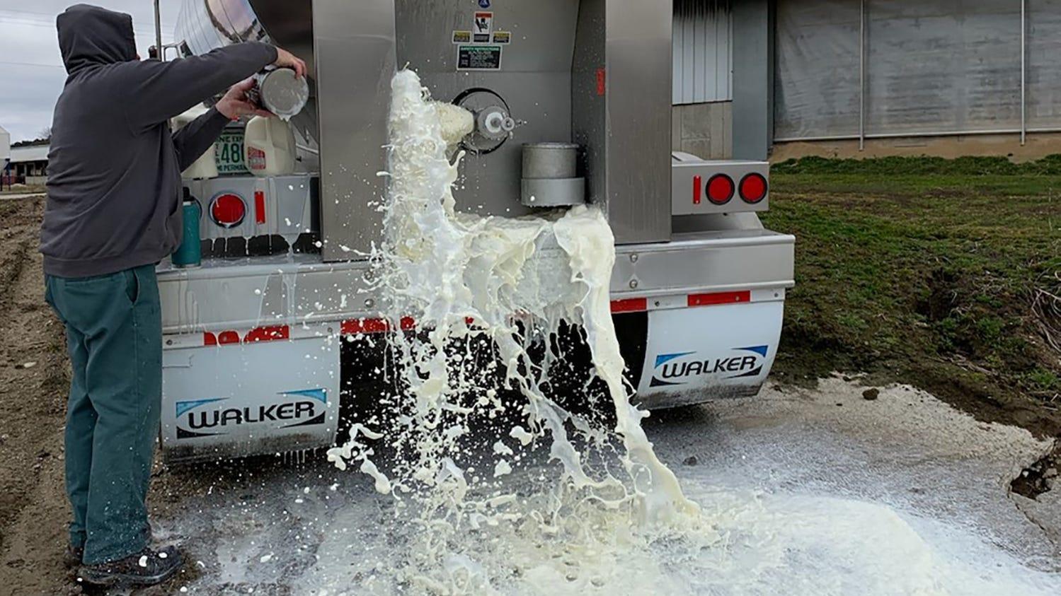 Wisconsin farmers forced to dump milk as coronavirus slams a fragile dairy economy