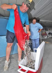 Cheryl Granger, of Maurice, Louisiana, watches as her husband, Albert Granger, empties a sack of shrimp into an ice chest. They use the internet and the Louisiana Direct Seafood program to help sell their product from their business near Maurice. Albert Granger also has a shrimp boat.