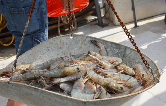 Fresh-caught shrimp is weighed at the dock in Delcambre, Louisiana. Fishermen and seafood dealers are having a difficult time selling their products because of the curtailment of restaurant business resulting from the coronavirus.