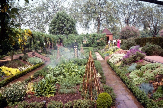 The medicinal garden at the Royal Botanical Garden at Kew was too cold to support cinchona trees for study.