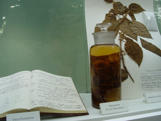 Jesuits discovered trees in the Andes with medicinal bark that yielded quinine.