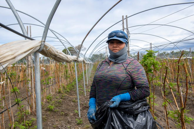 A portrait of Cruz Santiago wearing her face mask, hat and sunglasses as she works to cut out all the weeds from the ground during her shift on March 24, 2020.