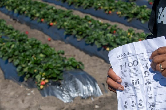 A Norcal Harvesting fieldworker holds a list of safety measures that according to the employee are being implemented in order to combat the COVID-19 pandemic. March 31, 2020.