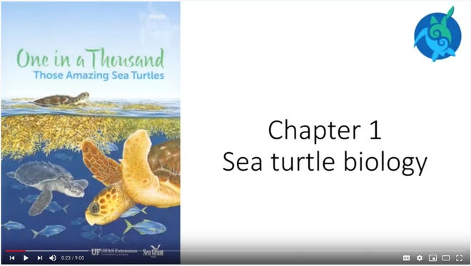 """""""One in a Thousand: Those Amazing Sea Turtles"""" introduces viewers to sea turtle biology, habitat and ways people can help protect sea turtles and their habitat."""