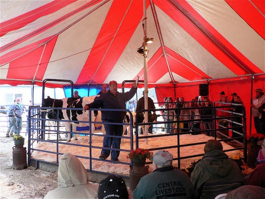 Cattle sales where top dairy cattle are often sold have come to a halt.