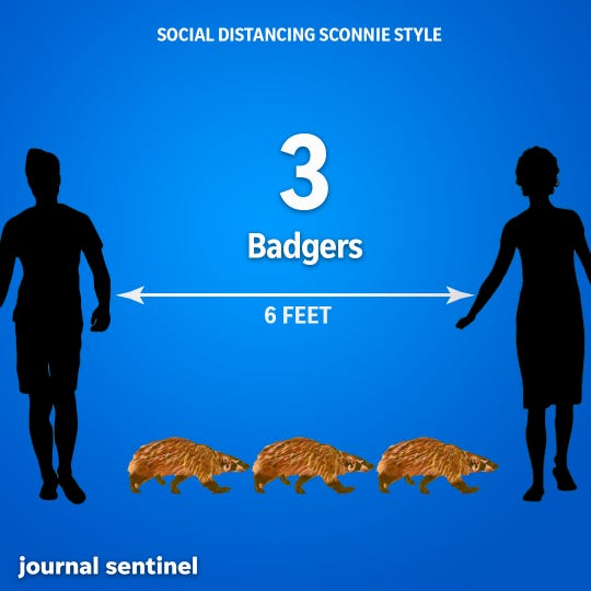 Social Distancing, Sconnie Style: An American badger measures about 24 inches long, so three badgers is equal to 6 feet.