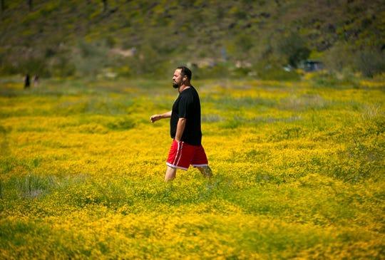 Matt Alexander de Glendale, camina por un sendero a través de la manzanilla globo en el Thunderbird Park en Glendale el 24 de marzo de 2020.