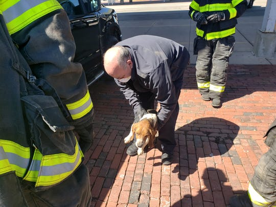 Zeke, a 2-year-old beagle, was trapped under a pickup for 40 miles and then freed this morning by firefighters.