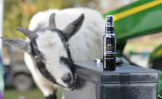 Jazzy the goat has a look at hand sanitizer produced by Windsor-based People Grow Together.