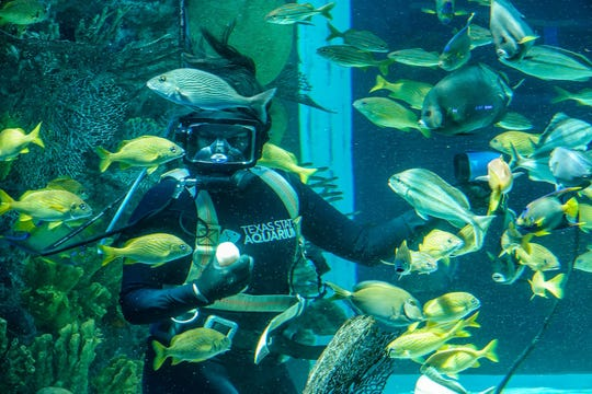 Texas State Aquarium staff member Melanie Kudra uses a camera to film an Aquavision distance learning show about a coral reef dive on March 24, 2020. The aquarium is producing the shows while a stay-at-home order is underway in Nueces County.