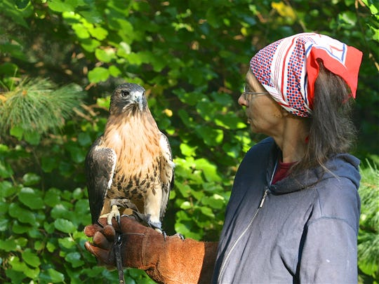 Barbara Harvey with Sasha, a red-tailed hawk, who had been shot with an arrow and could no longer fly. Harvey and Sasha did programs together for over 25 years.