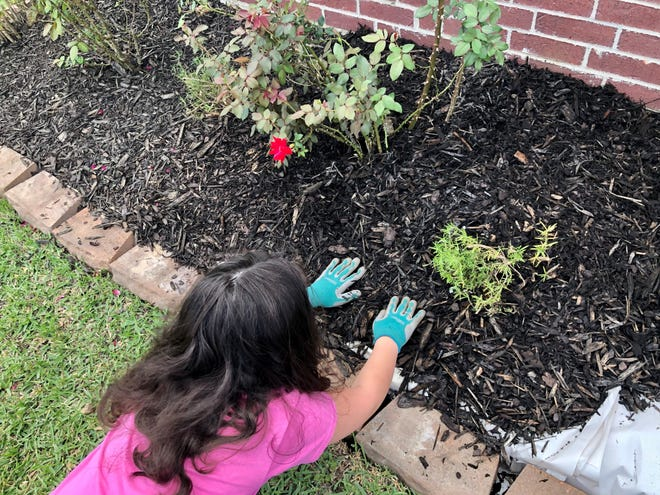 Elizabeth Cunningham, 8, prepares a flower bed with dad Joe Cunningham. Hear Joe's tips for gardening in this week's episode of the Homestyle podcast on your favorite podcast app or theadvertiser.com.