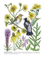 Wet-Mesic Prairie: Natural Communities of Wisconsin Series, watercolor.