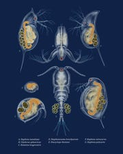 Zooplankton of the Great Lakes, digital.