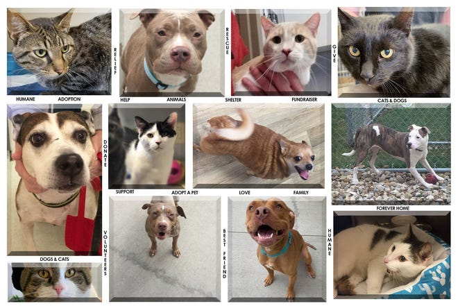 The animals pictured above and many more are available for adoption at the Humane Society of Richland County.