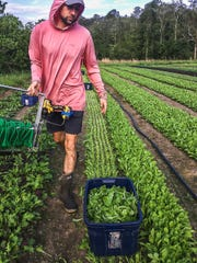 Timothy Robb works on Mississippi's Compostella Farm, which he owns with his wife, Madeline Yoste.