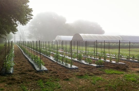 A foggy morning at Local Appetite Growers farm in Alabama's Baldwin County.