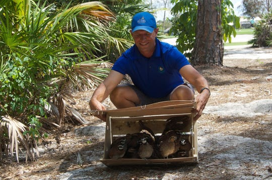 Matt Clem, golf course greens superintendent at Quail Creek Country Club in North Naples, releases farmed quail from their delivery crate into what was once native habitat for the species.