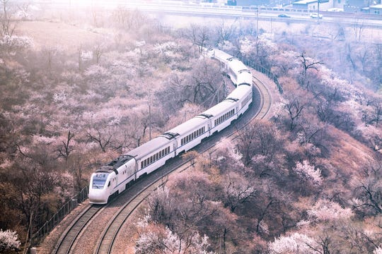 Jana's fast and affordable bullet trains, which were recently updated to accommodate the now-postponed Olympics, are the best way to get around the mainland to see the country's famous cherry blossoms.