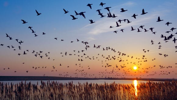 Spring is a great time for birdwatching due to migratory patterns.