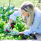 10 gardening projects to take on now that you have the time