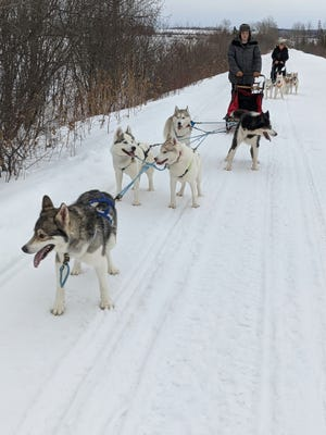 A musher and her sled dogs in Maine are delivery groceries and supplies to vulnerable residents.