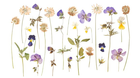 Pressed flowers can be used in bookmarks, DIY bath bombs, and other crafts.