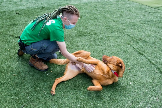 """Kayla Tooley, an Animal Care Technician at the Vanderburgh Humane Society, plays with Karusso during yard time Wednesday morning, April 1, 2020. With Vanderburgh Humane Society closed because of the state's """"Stay-at-Home"""" executive order from Gov. Eric Holcomb due to the COVID-19 pandemic, adoptions have stopped. Maintaining care for animals continues to be a top priority."""