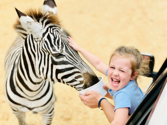 Come pet a zebra from your car at Alabama Safari Park in Hope Hull.