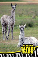 Curious animals are waiting for visitors at Alabama Safari Park in Hope Hull.