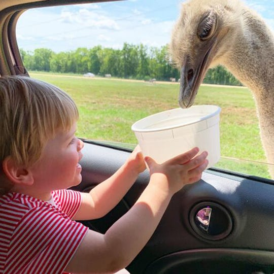 What a big bird. Kids can feed the animals from the safety of their vehicles at Alabama Safari Park in Hope Hull.