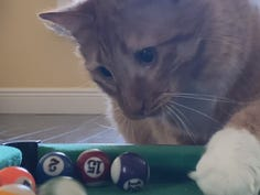 Hey look another cat video on the Internet.  This one shows off his pool playing prowess.