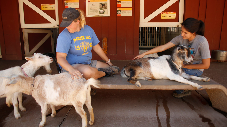 Phoenix Zoo working to combat loneliness felt by animals during coronavirus closure