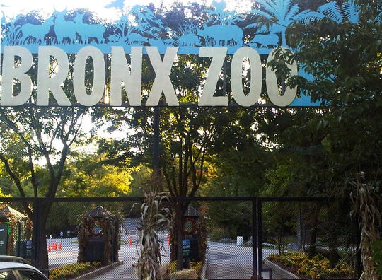 A tiger at New York's Bronx Zoo has tested positive for the new coronavirus. It's believed to be the first infection in an animal in the U.S. and the first known in a tiger anywhere, the U.S. Department of Agriculture said Sunday. The zoo says all the animals are expected to recover.