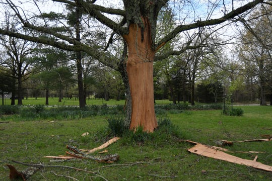 A lightning strike did severe damage to this oak tree in rural Mountain Home on Thursday night. The strike threw pieces of bark up to 30 feet away from the tree, which is believed to be between 40 and 50 years old.