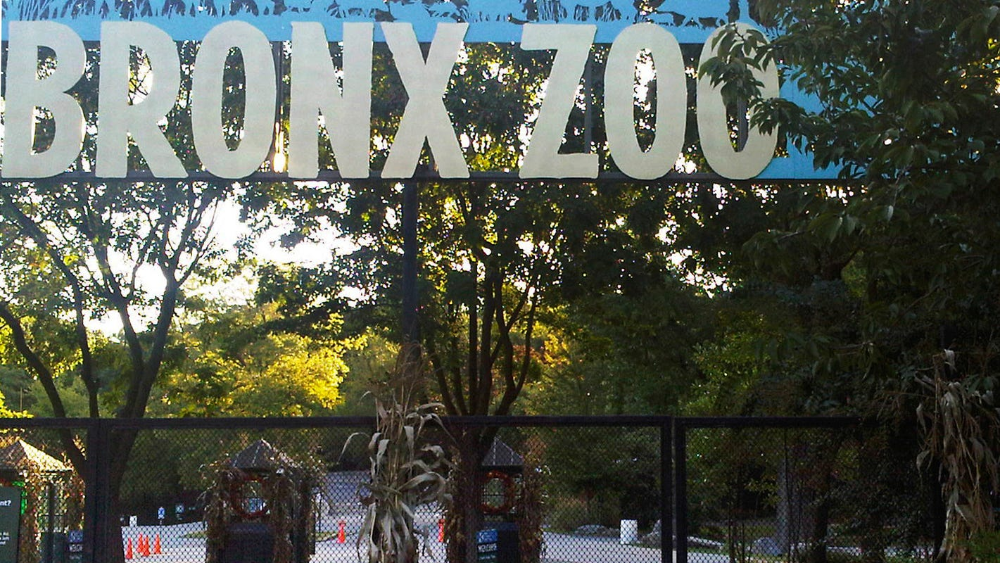 New York relaxing COVID capacity limits for zoos, museums, sports arenas. What to know