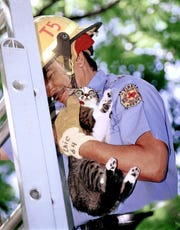Abilene firefighter Chic Alvarez retrieves Bangles, a cat, from a tree in the spring of 2001. It took the Truck 5 crew almost a half-hour to corner the feline, who only scampered higher the closer they got to her.