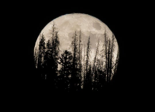 Evergreen trees are silhouetted on the mountain top as a supermoon rises over over the Dark Sky Community of Summit Sky Ranch in Silverthorne, Colo., Nov. 14, 2016.