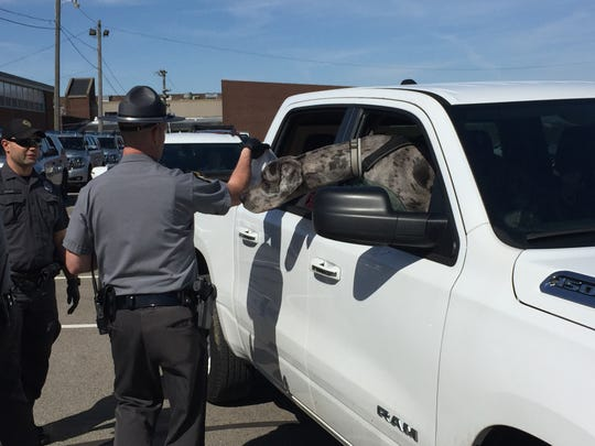 An inquisitive dog wants to check out the food being handed out by state troopers Monday  at Shelby Middle School.