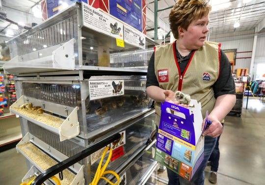 Whittney Young, pet and chicken department manager at the IFA Country Stores in Riverton, Utah, sells chicks to customers Thursday, March 26, 2020. The agricultural sector is seeing a run on supplies including chicken feed, horse feed, dog food and a higher interest for chicks.