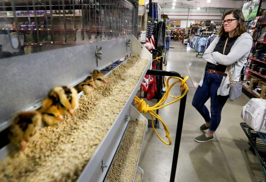 Katy Cox buys chicks at the IFA Country Stores in Riverton, Utah, Thursday, March 26, 2020. The agricultural sector is seeing a run on supplies including chicken feed, horse feed, dog food and a higher interest for chicks.