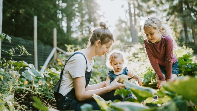 Interest in gardening has increased as people look to pass the time with new hobbies and to be more self-reliant after recent panic buying that led to short-term food shortages.