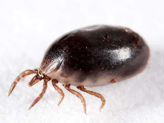 Metro Detroit Expected To See Jump In Ticks Ants This Spring Summer