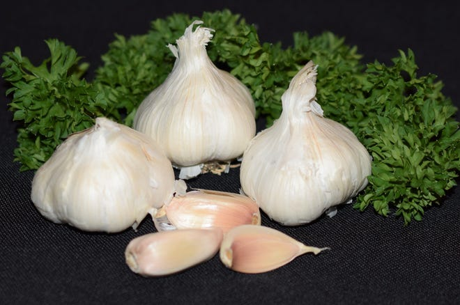 National Garlic Day is April 19 and garlic is a versatile cooking ingredient.