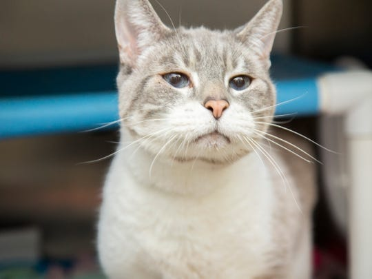 Interested adopters can view available pets, like Finnease, and schedule an appointment online at azhumane.org/adopt.