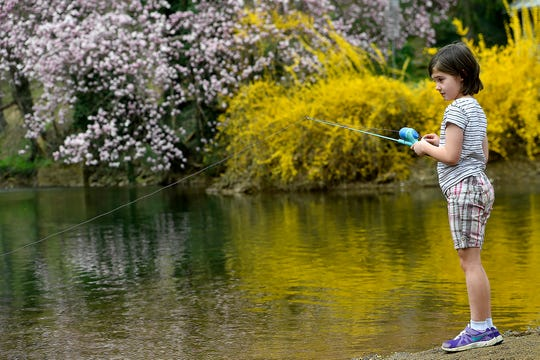 Grace Kauffman, 8 of Brogue, tries to catch a trout at Muddy Creek Forks, Tuesday, April 7, 2020. The PA Fish & Boat Commission surprised anglers by opening trout season across the state more than a week before the scheduled opening day of April 18. 