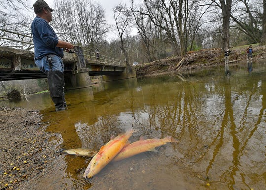 David Bent of Delta scored two of the biggest trout he ever caught while fishing the surprise opening day at Muddy Creek Forks, Tuesday, April 7, 2020. The PA Fish & Boat Commission opened rout season across the state, Tuesday,  more than a week before the scheduled opening day. 