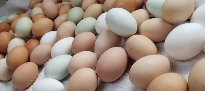 """Funny Farm's chickens are doing what they can to help while the farm is closed by producing eggs that the farm, which is at 6908 Railroad Blvd., is selling for $3 per dozen. The eggs, along with a donation box, are on a table outside the front gate so that a """"socially distant"""" purchase can be made."""