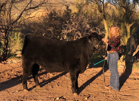 Ella Levin raises steer for the 4-H beef project. She poses with Poncho, who will be sold at the Pima County Fair virtual auction, on Feb. 17, 2020.