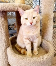 Adoptions at the shelter, 10807 N. 96th Ave., where Dodge is living, are by appointment only from noon to 2 p.m. Tuesdays-Saturdays.